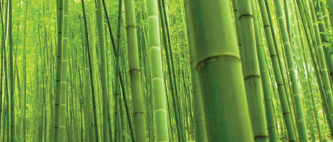 close up shot of bamboo growing